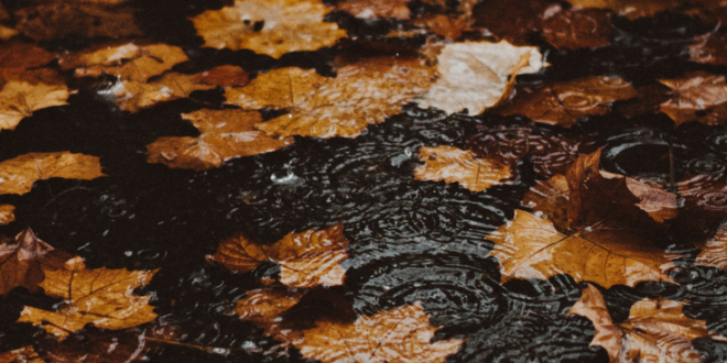 4 Reasons Why Fall/Autumn is the Best Season Ever - Kirsten Jonora Renfroe