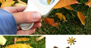 7 Ways To Turn Your Fall Leaf Collection Into Art | Handmade Charlotte
