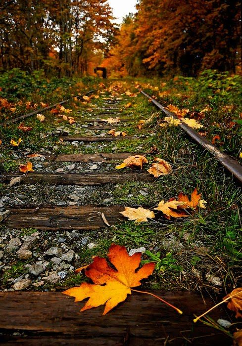 October - I used to love fall, and somehow, I must still. I just do n